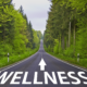 The Quest For Ultimate Health And Wellness And How To Begin